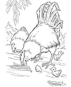 Free Printable Farm Animal Coloring Pages For Kids Farm Animal Coloring Pages Farm Coloring Pages Chicken Coloring Pages