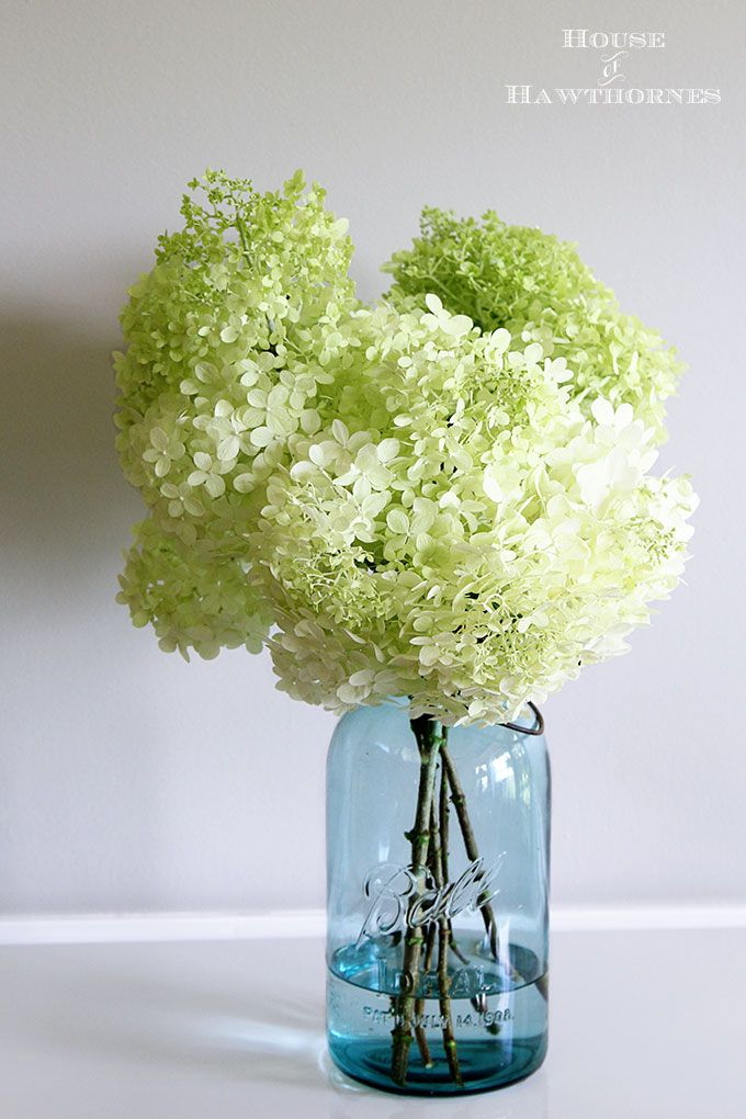 lazy girl 39 s guide to drying hydrangeas des fleurs blanches pinterest fleurs blanches. Black Bedroom Furniture Sets. Home Design Ideas