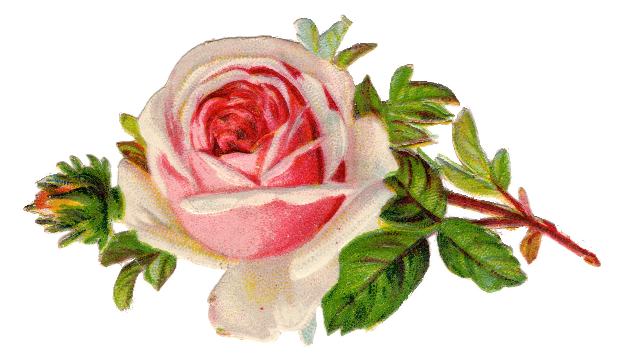 Free Vintage Rose Clip Art Best Free Digital Goods Pinterest