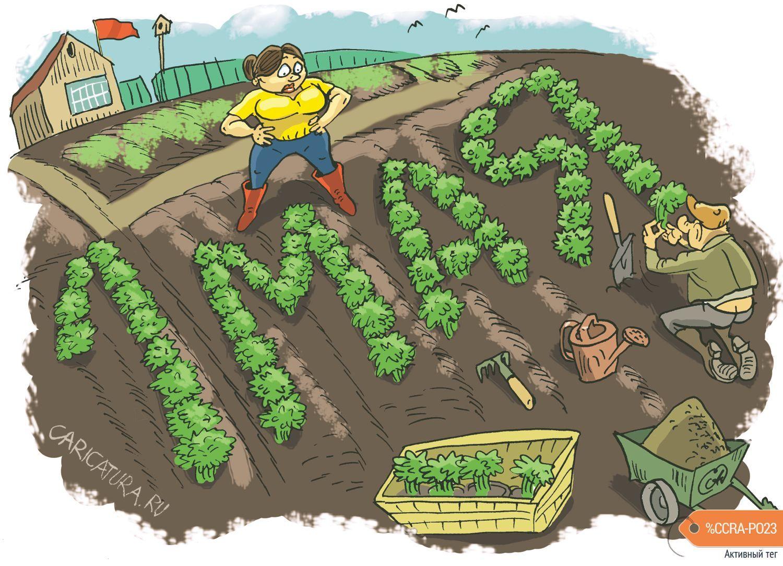 веселые картинки про дачу и огород как высчитать процент