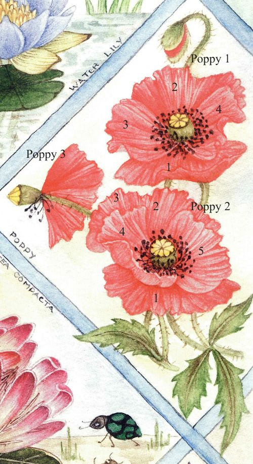 Numbered petals Poppies, How to make corn, Paper flowers
