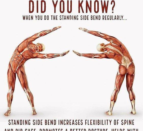 Do Standing side bend regularly - Fitness facts - Hilarious Pins #health #humor #fitness #dailyexcer...