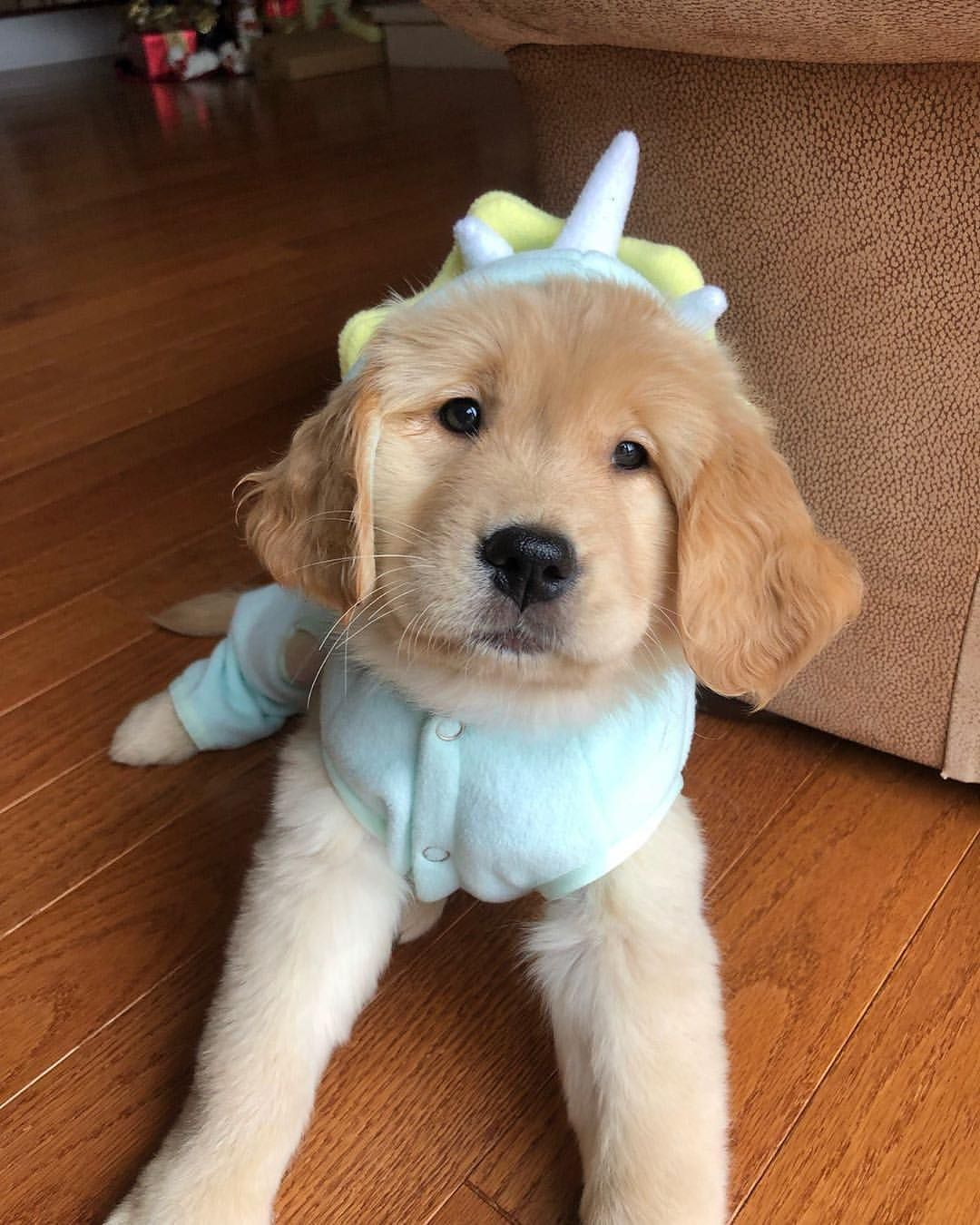 Golden Retrieversはinstagramを利用しています Missy On A Mission Tag A Friend Follow Retrieverthegolden Use Retr Golden Retriever Cute Dogs Dogs