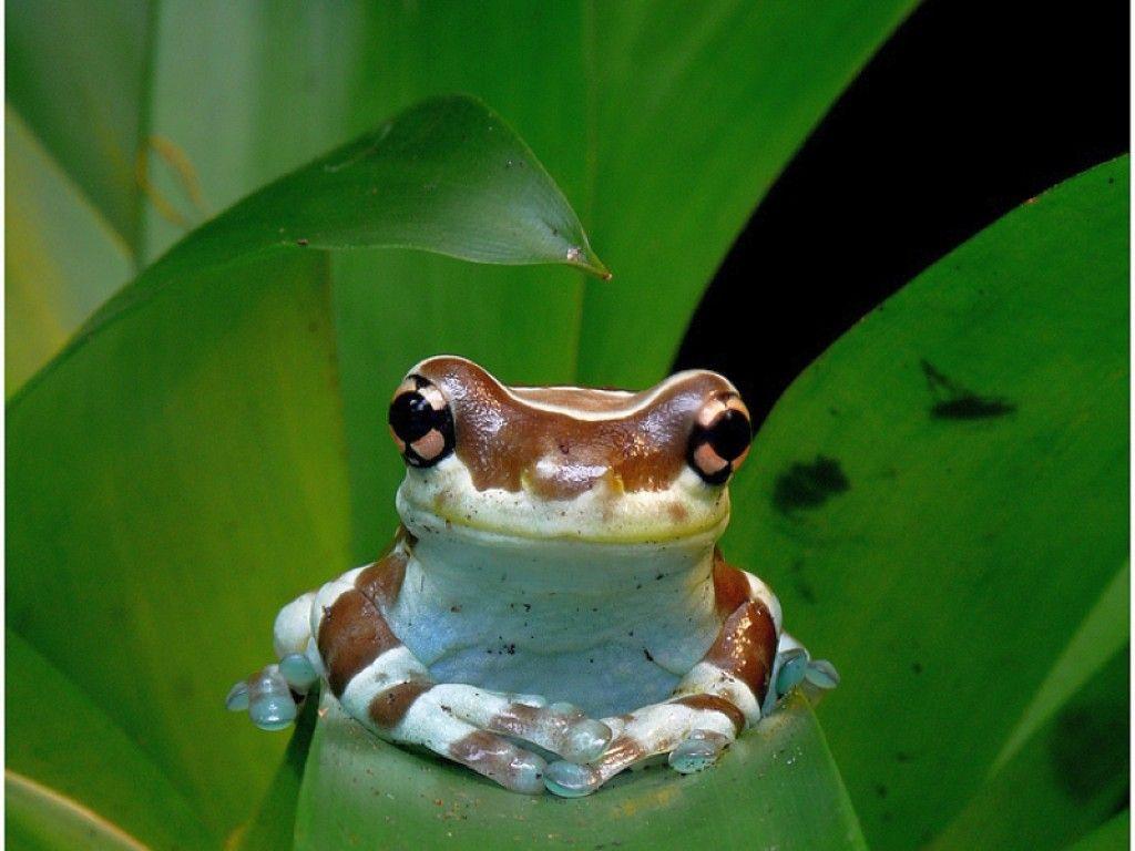 Cute Frogs Little Frog Cute Picture Desktop Wallpaper Download Little Frog Cute Frog Cute Frogs Frog Wallpaper