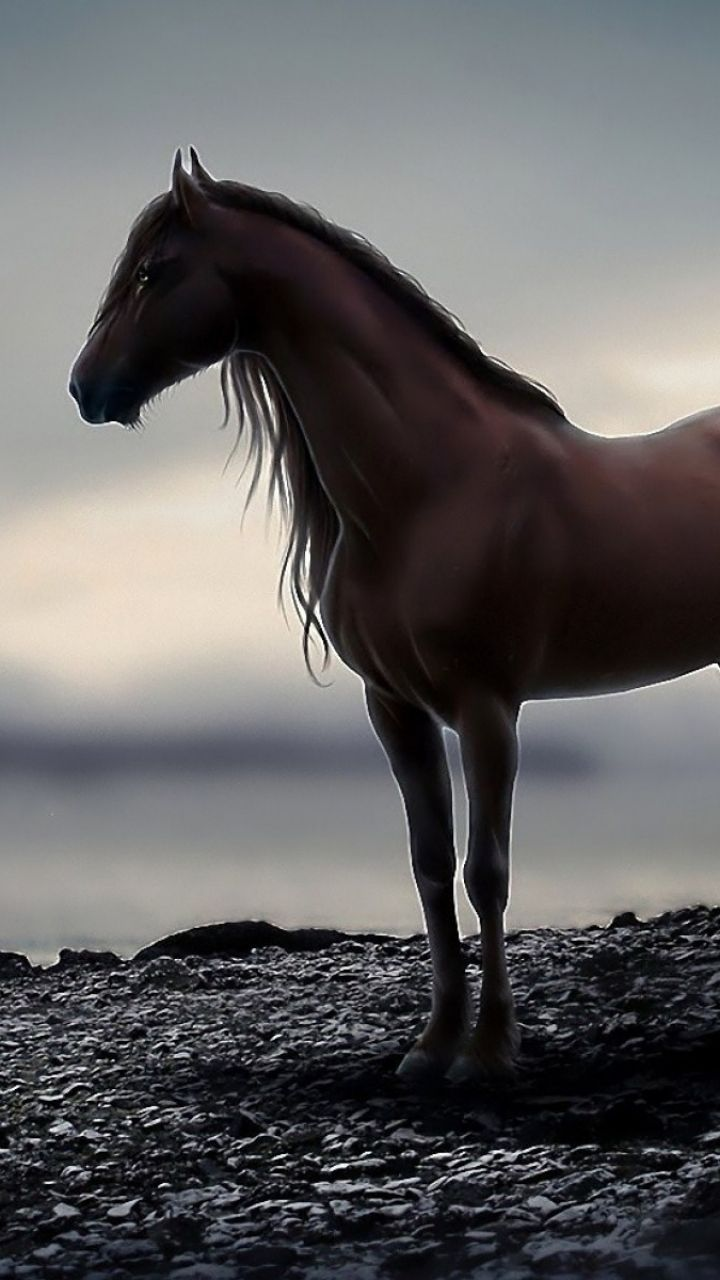 Animal Horse Mobile Wallpaper
