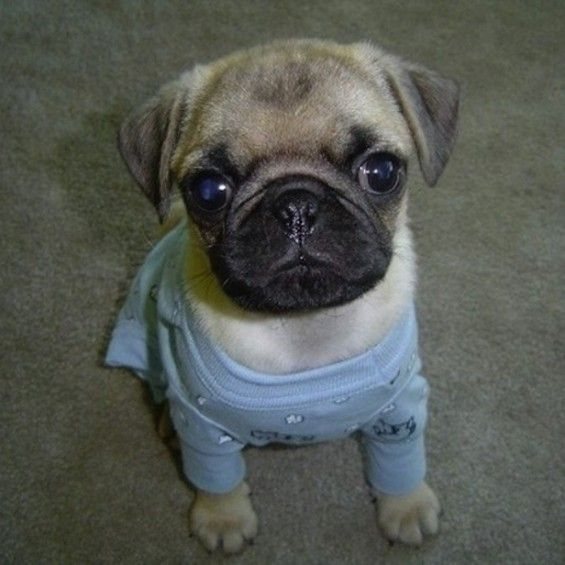 Animals In Pijamas Ready For Bed Gallery Puppies In Pajamas