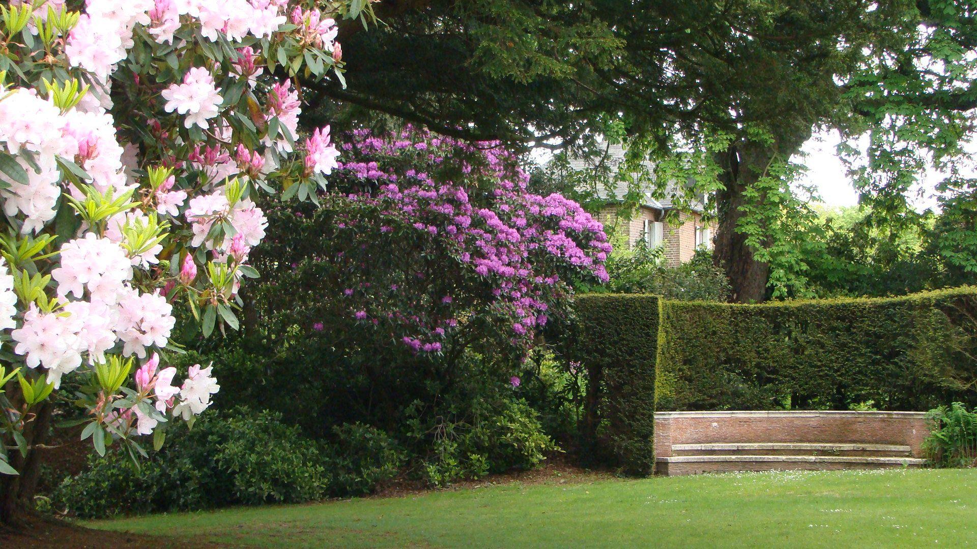Rhododendron Bois Des Moutiers Varengeville Rhododendron Jardins Et Bois