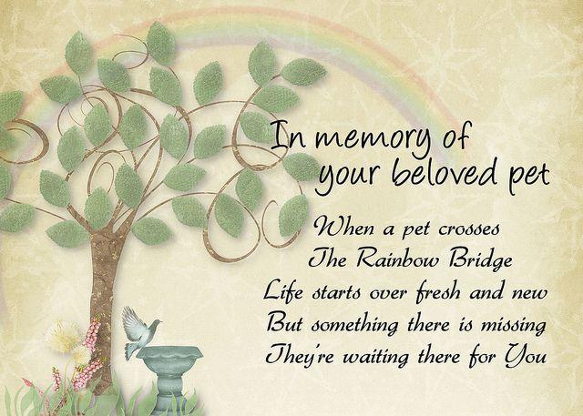 Rainbow Bridge pet loss sympathy | Rainbow bridge poem ...