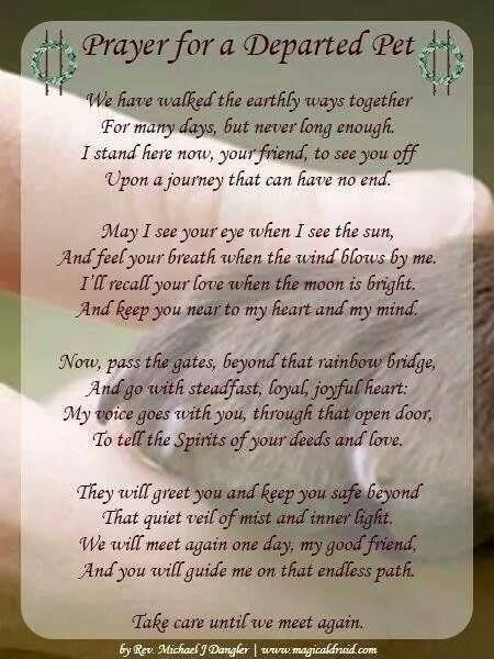 Until We Meet Again Dog Poems Pet Loss Grief Animal Quotes