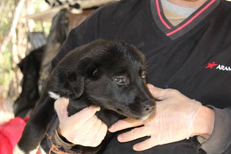 VA to ME....Alice is a 12 week old Border Collie/Lab mix