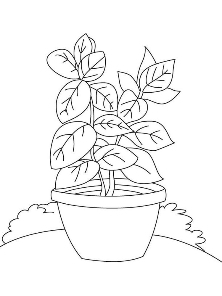 Plant Coloring Pages For Preschoolers Plants Are One Of The Creatures That Occupy This Earth His Li Coloring Pages Tree Coloring Page Coloring Pages For Kids