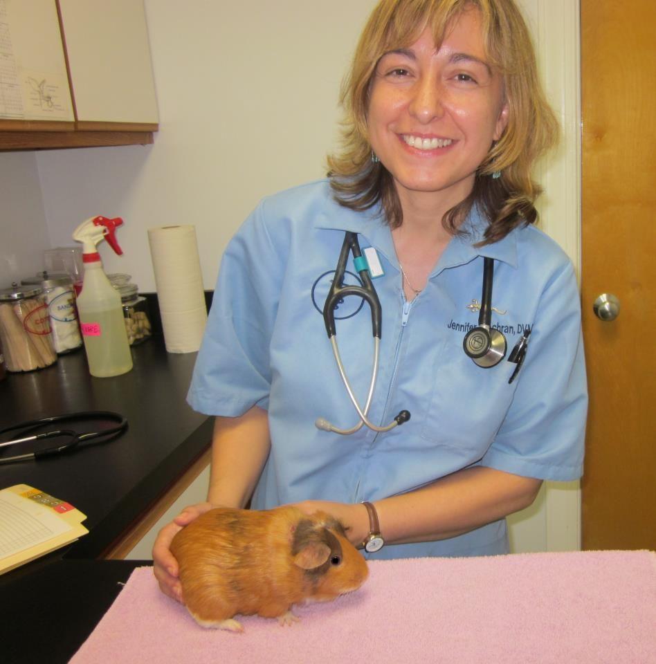 Pin On Nansemond Veterinary Clinic