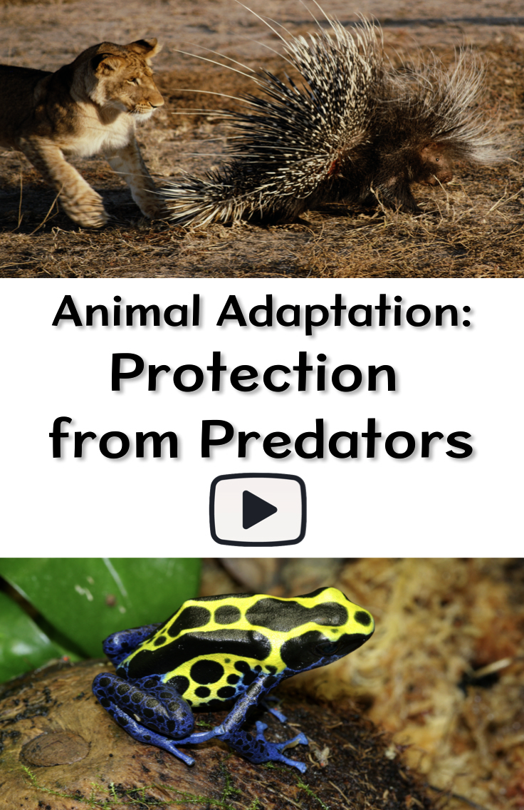 Animal Adaptation Protection From Predators Pinterest Animal