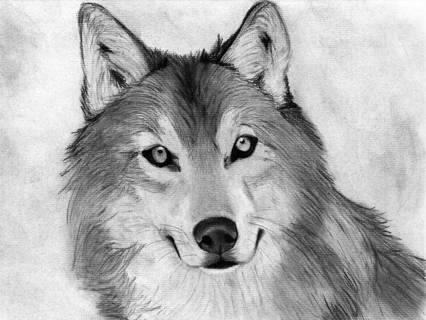 Charcoal drawing of animals