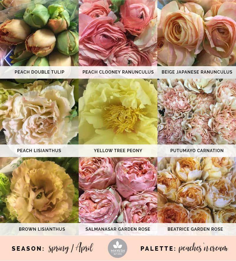 Mayesh Cooler Picks Spring Peaches Cream Products Top Peach Double Tulip Peach Clooney Ranunculus Beige Japan Peach Flowers Ranunculus Tree Peony