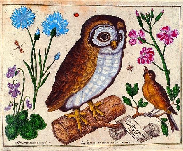 Botanical livres de fleurs 1620 3 hiboux pinterest for Botanic fleurs artificielles