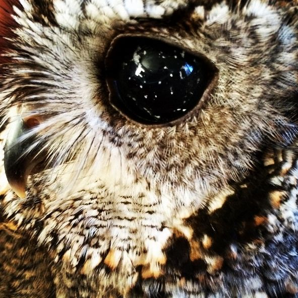Zeus, The Blind Rescue Owl, Has Galaxies in His Eyes (With Exclusive Videos)