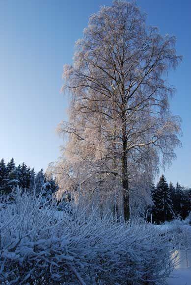 December walk, Rödshöjd, Stenungsund - Sweden