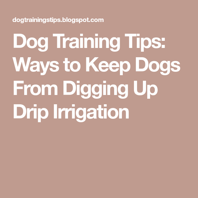 Dog Training Tips: Ways To Keep Dogs From Digging Up Drip