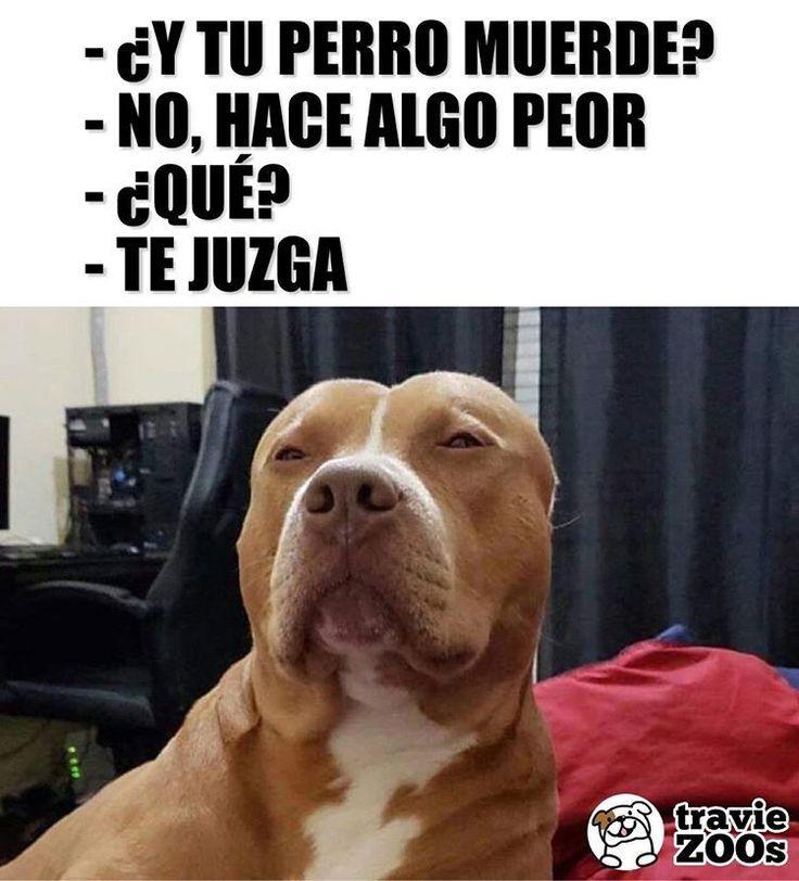 Oh Mi Corazon Juicio Dog Pitbull Aggressive Funny Sarcasm Perritos Memes Divertidos Memes De Animales Divertidos Humor Divertido Sobre Animales