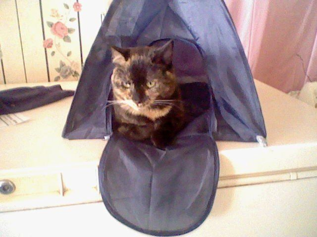 Hahah my old cat Molly in her little tent