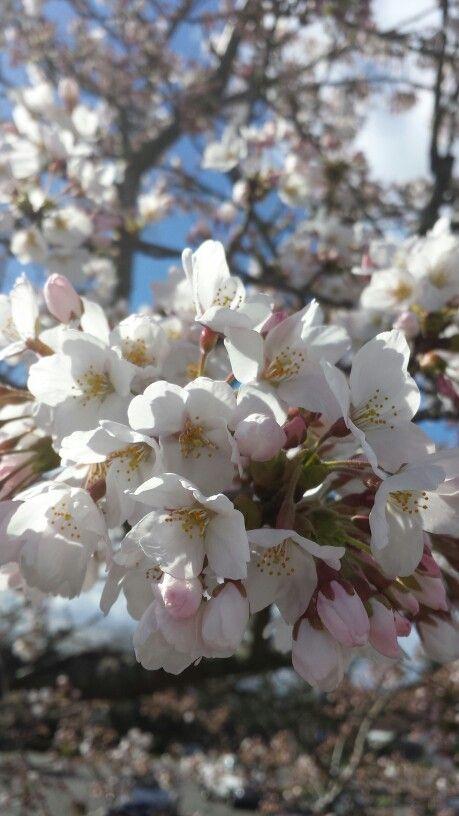 White blossoms up close