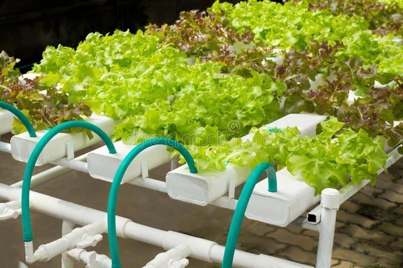 Vegetable Gardening. System using water no soil ,