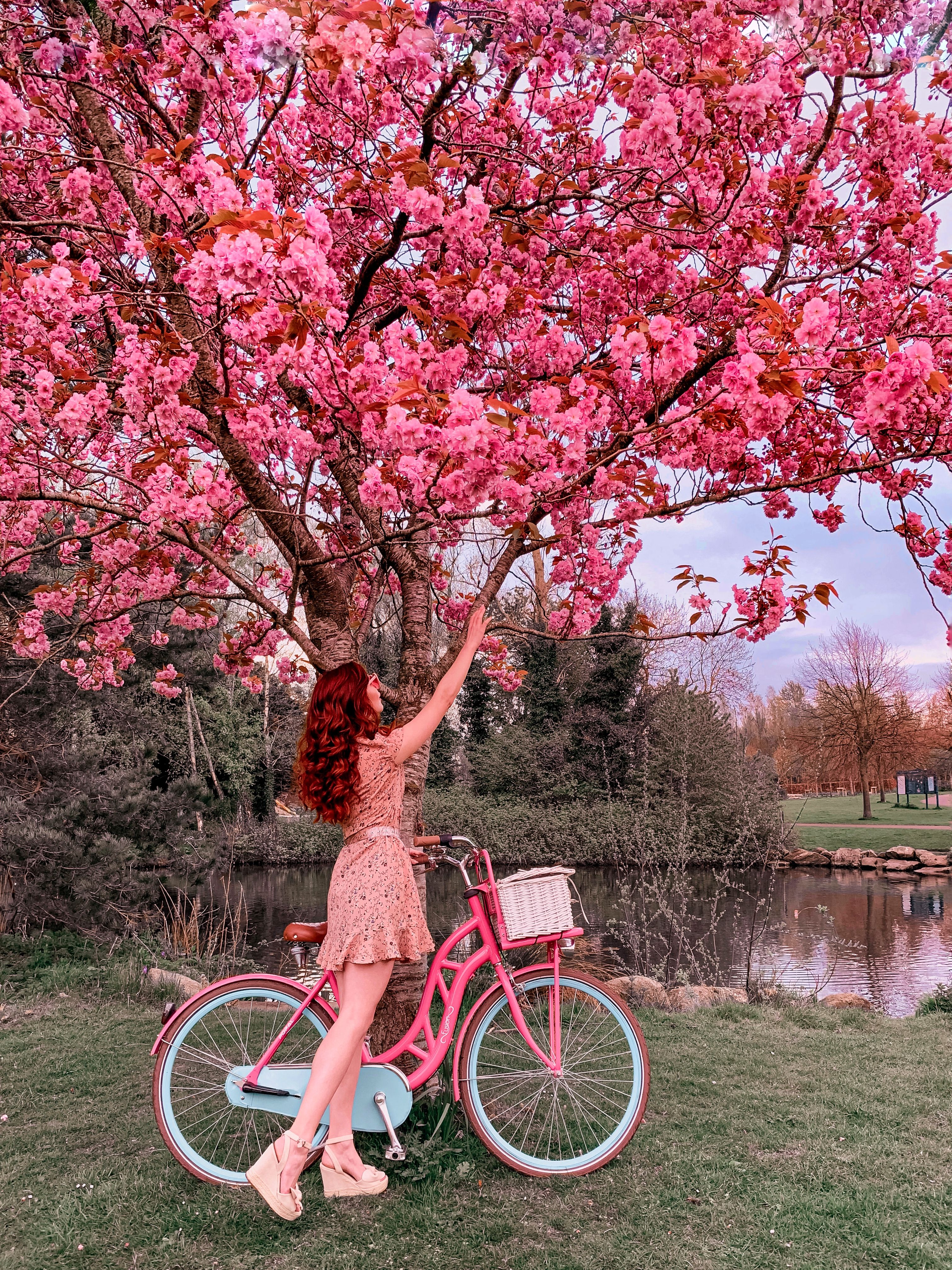 Beautiful Spring Bike And Flowers Photo Shoot Cherry Blossom Tree Instagram Photoshoot