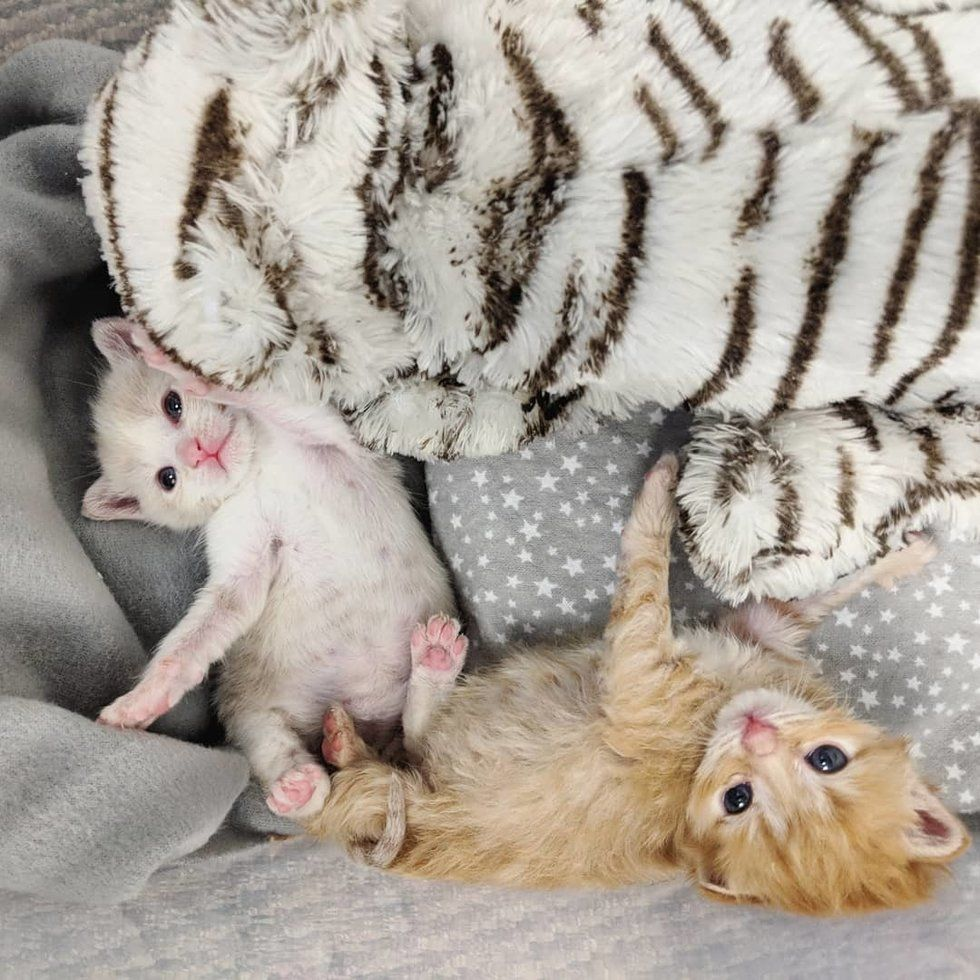 Kitten Keeps Her Shy Brother Comforted After They Were Found Abandoned In A Yard Love Meow Kitten Little Kittens Cuddling