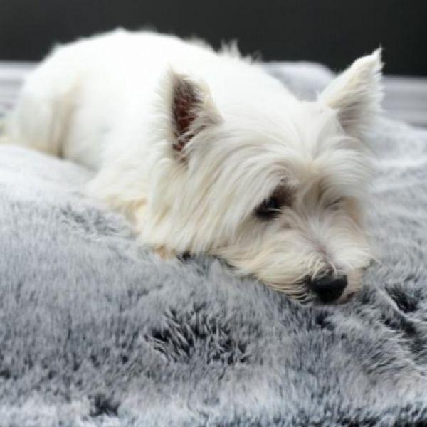Company dog stylish new photo