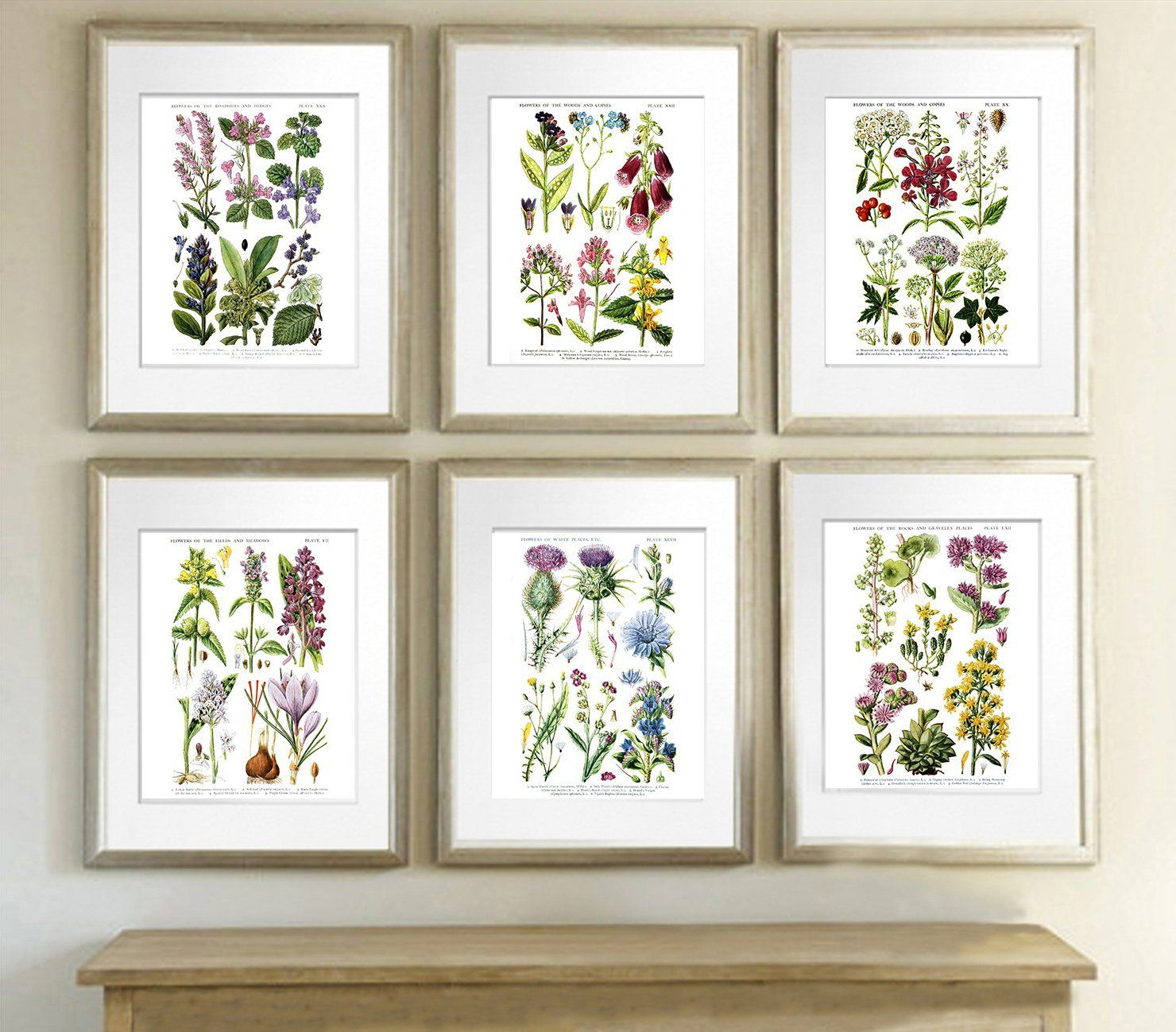 How to frame art prints - Image Result For Framed Photos Of Wildflowers How To Display