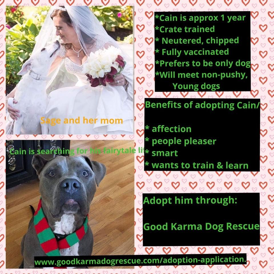 Become A Certified Dog Trainer Iscdt Crate Training Helping