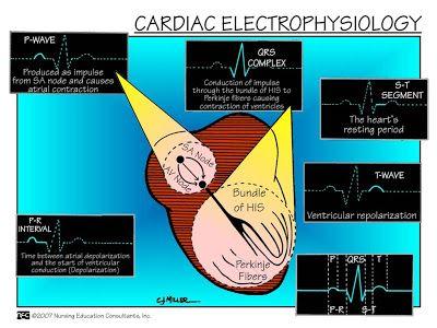 Cardiac Electrophysiology-ABC Medicine