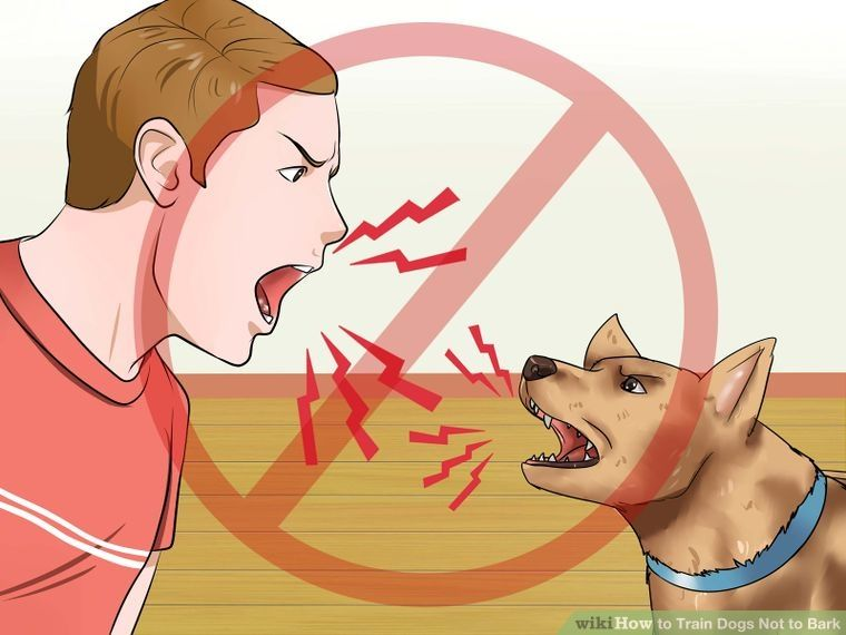 Train Dogs Not To Bark Dog Training Dog Training Tips Dog