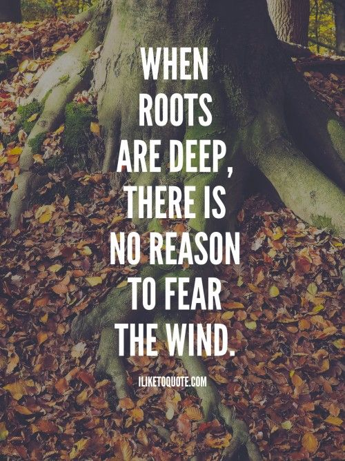 Roots Quotes New When Roots Are Deep There Is No Reason To Fear The Wind In 48