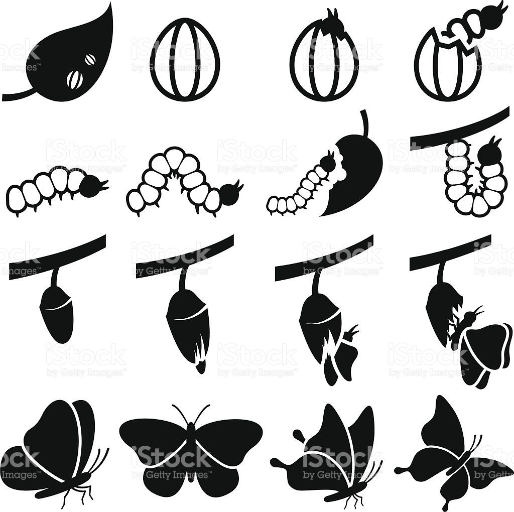 Cocoon to Butterfly Transformation black and white icon