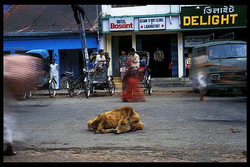 Tezpur, Assam, India...