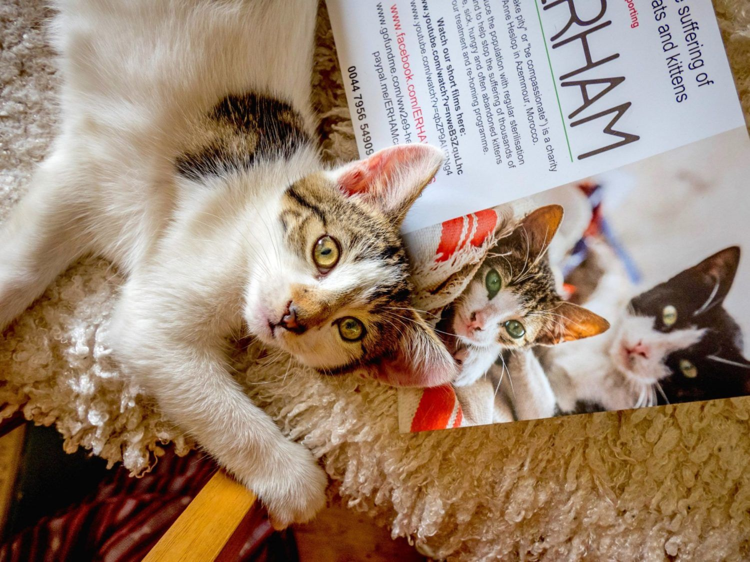 London Catfest The Cat Festival Is Back In Beckenham Place In 2020 Cats Camping With Cats Pet News