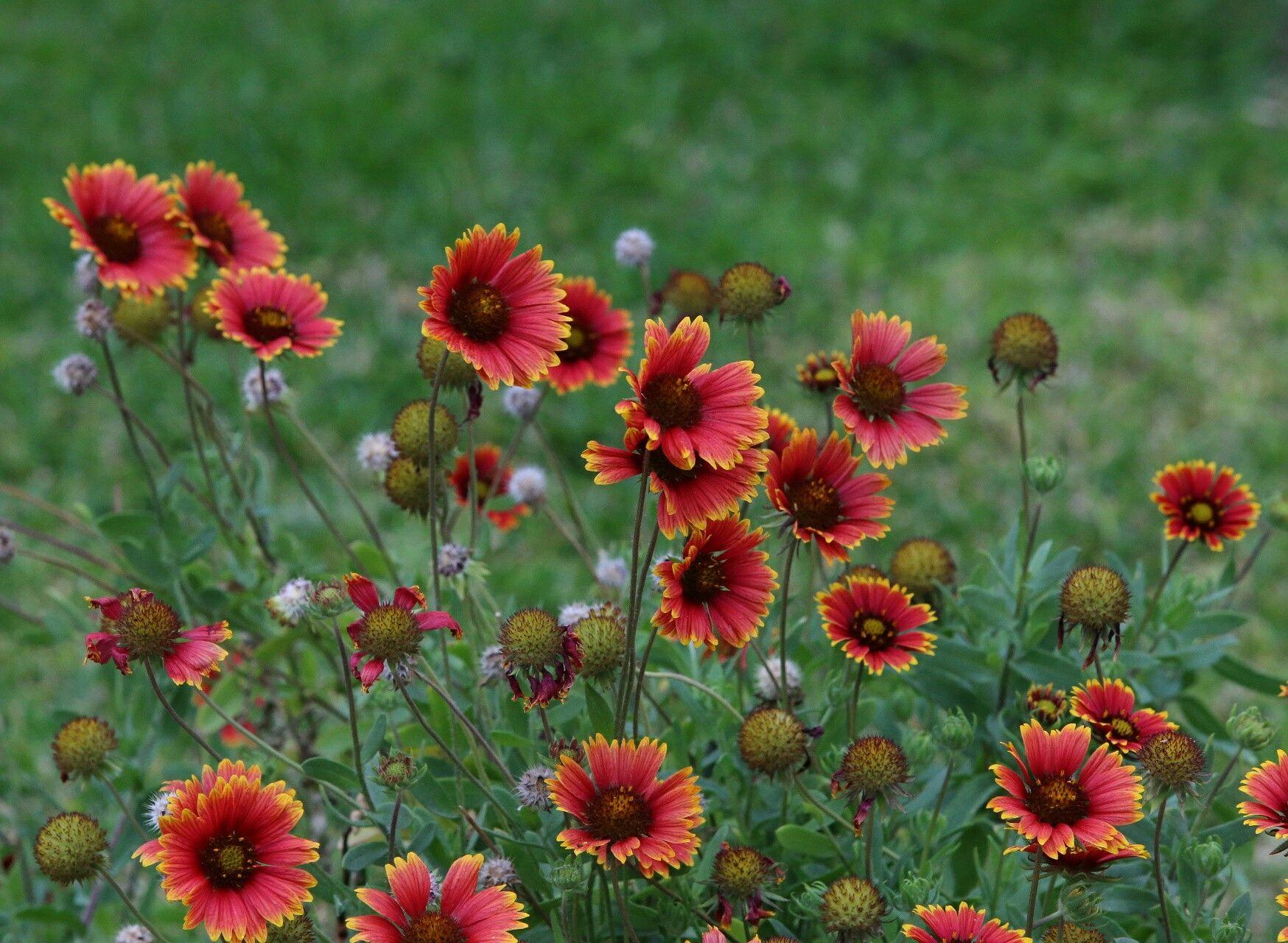 Ras Tanura Plants Photo Beautiful