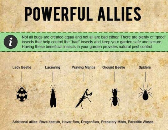 Infographic How To Protect Your Garden With Organic Pest Control Methods Organic Pest Control Diy Pest Control Organic Pest