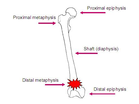 diagram of long bone showing the locations of the metaphysis, Wiring diagram