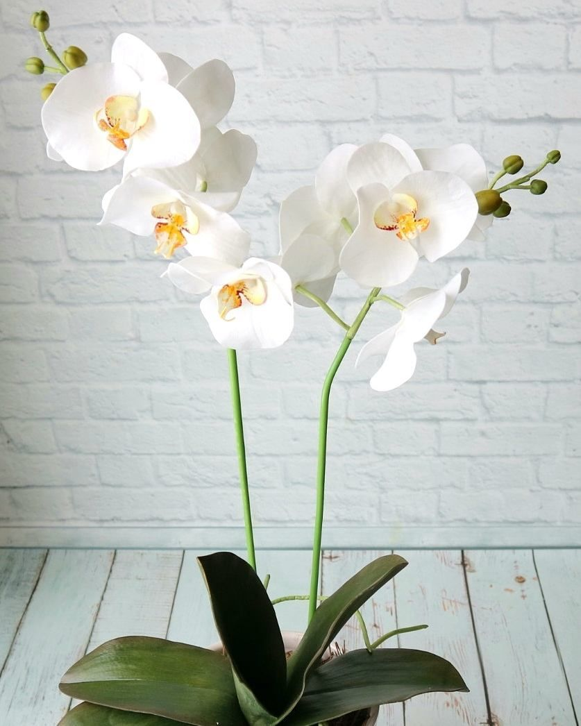White Real Touch Orchid Flowers Handmade House Potted Plants Etsy Orchid Flower Orchids Amazing Flowers