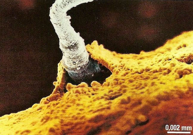 rencontre spermatozoide avec ovule Le Havre