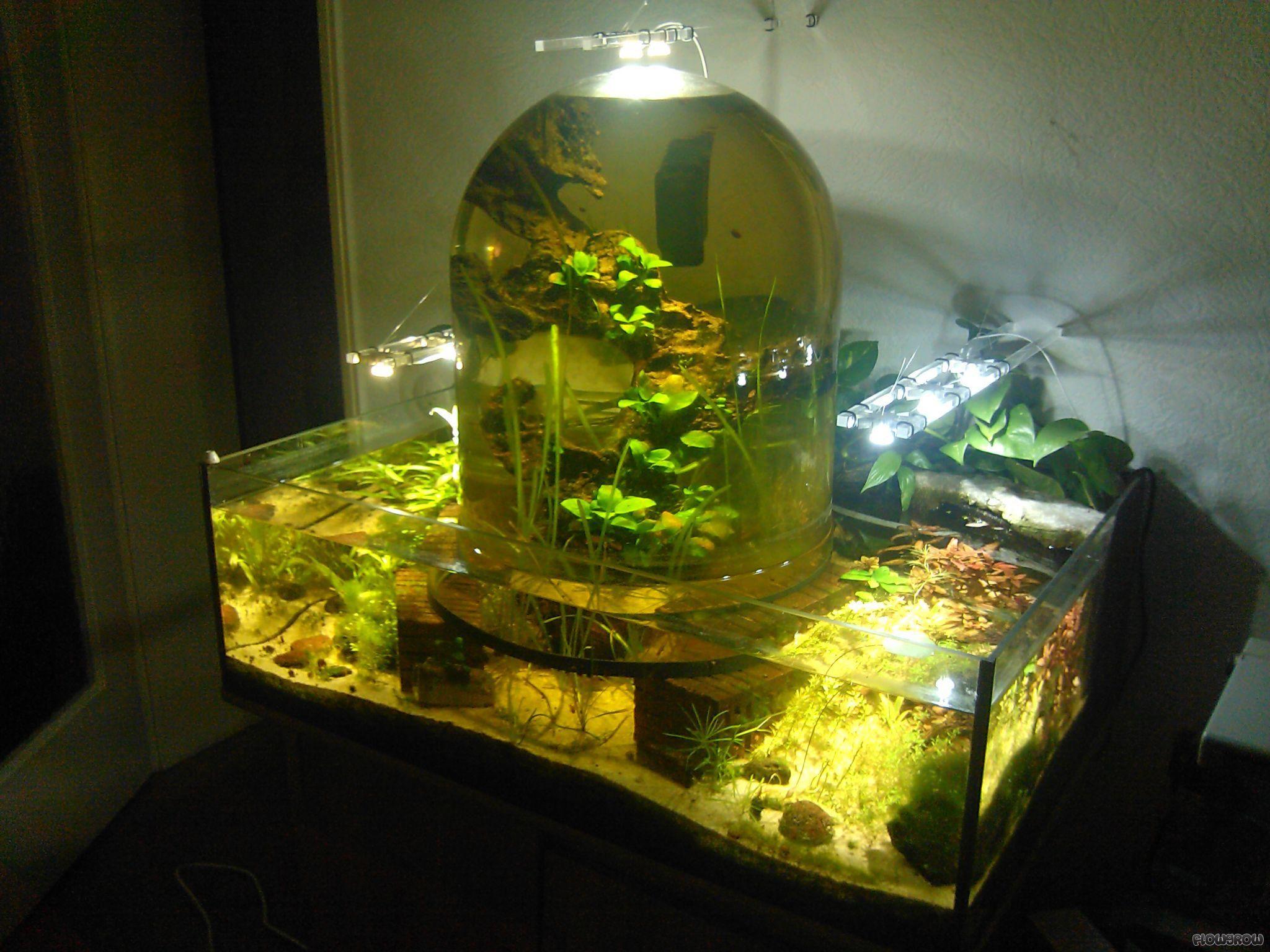 Aquarium selber bauen aquarium deko selber bauen diy ideen pinterest aquarium aquarium - Aquarium unterschrank selber bauen ...