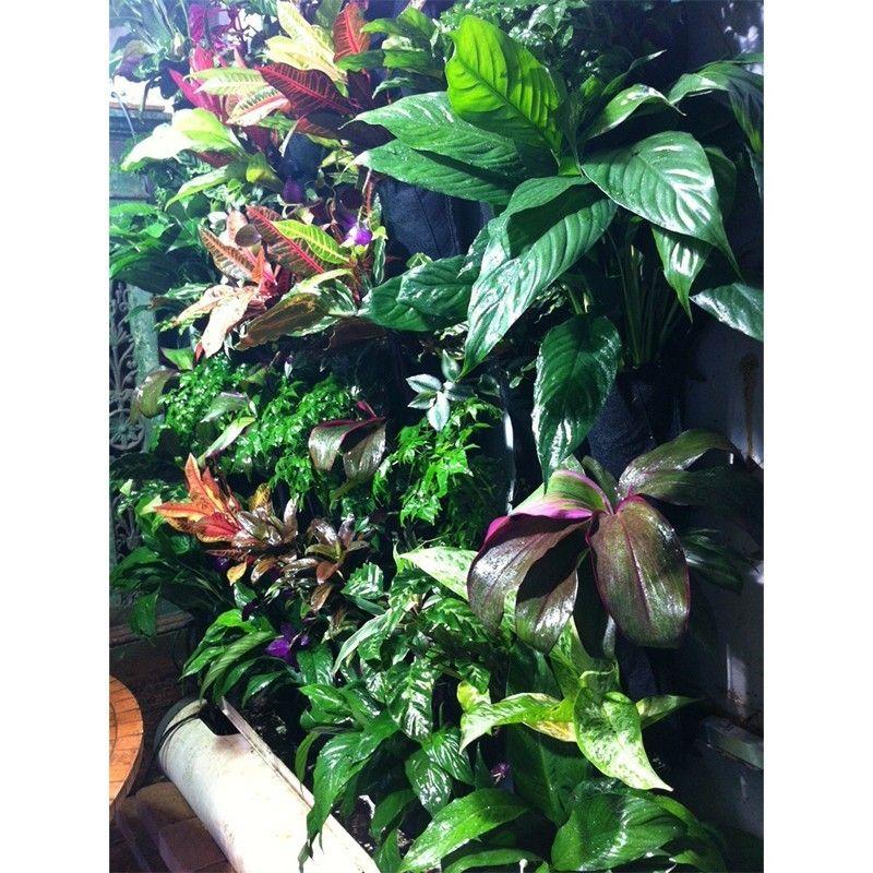 24 Indoor Herb Garden Ideas To Look For Inspiration: Cityforest Greenwall Pockets