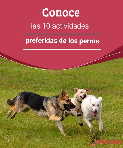 Conoce Las 10 Actividades Preferidas De Los Perros Mis Animales Actividades Para Perro Perros Adiestramiento Perros
