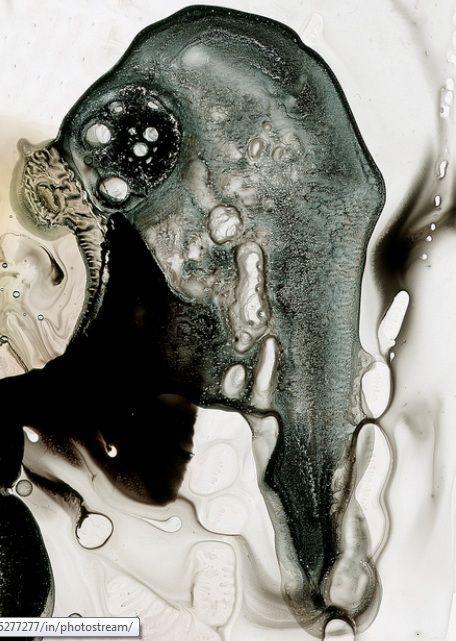scannogram by Alfredo Fuchs - Google Search