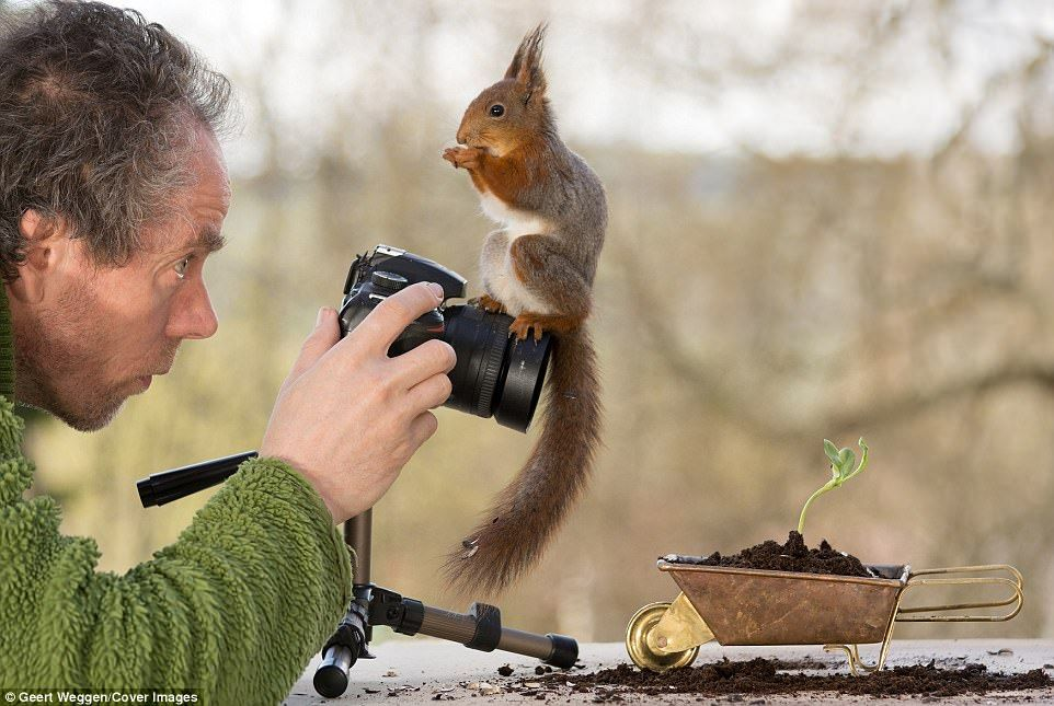 Say Nuts Nifty Squirrels Turn Nature Photographer Into Their Subject Ardillas Fotografia Curioso
