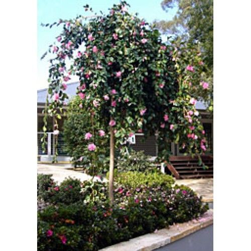 The Page You Requested Cannot Be Found Backyard Plants Plants Camellia