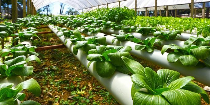 Image result for Hydroponics and Why are They Unique
